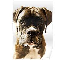 Let Me Tell You A Secret - Boxer Dogs Series Poster