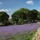 Winding Walls - Dartmoor National Park by garykingphoto