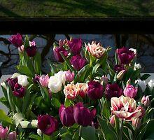 Tulips at Keukenhof by Morag Anderson
