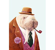 Worldly Walrus Photographic Print