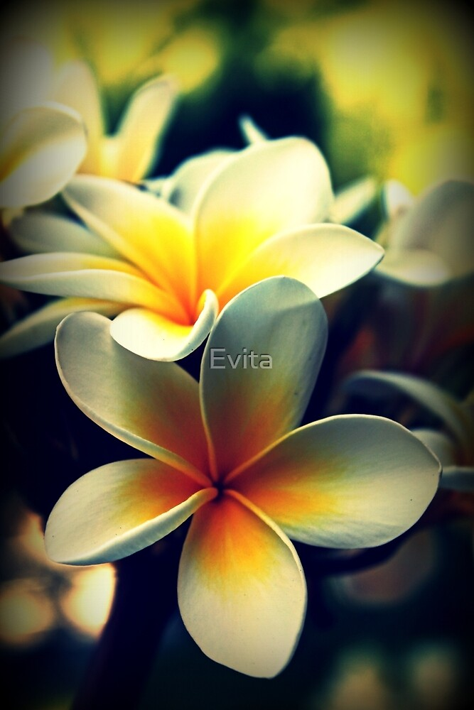 Memories Of A Summer Gone By by Evita