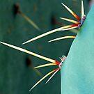 Cactus Macro by Leon Heyns