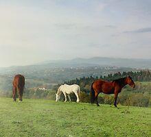 Automanal Horses by KERES Jasminka