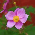 Anemone by Aase