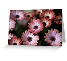 African Daisy Zion Red Greeting Card