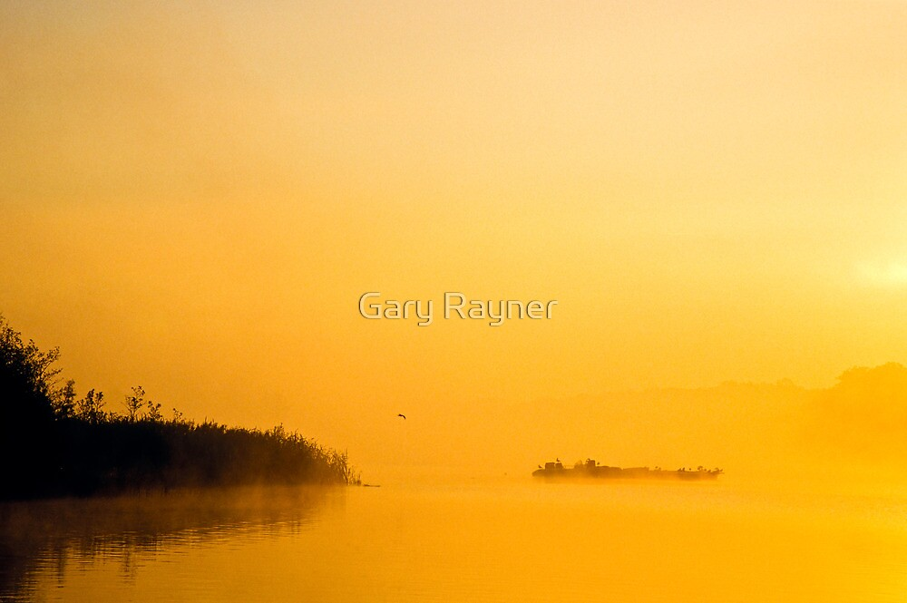 Golden mist by Gary Rayner