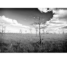 Pond Cypress, Corkscrew Swamp 2011 Photographic Print
