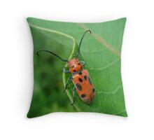 Spotted Asparagus Beetle - Crioceris duodecimpunctata Throw Pillow
