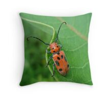 Spotted Asparagus Beetle - Crioceris duodecimpunctata Throw Pillow