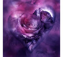 Heart Of A Rose - Burgundy Purple Photographic Print
