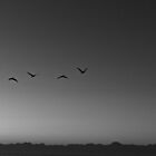 Birds of a Feather by Kevin Stauss