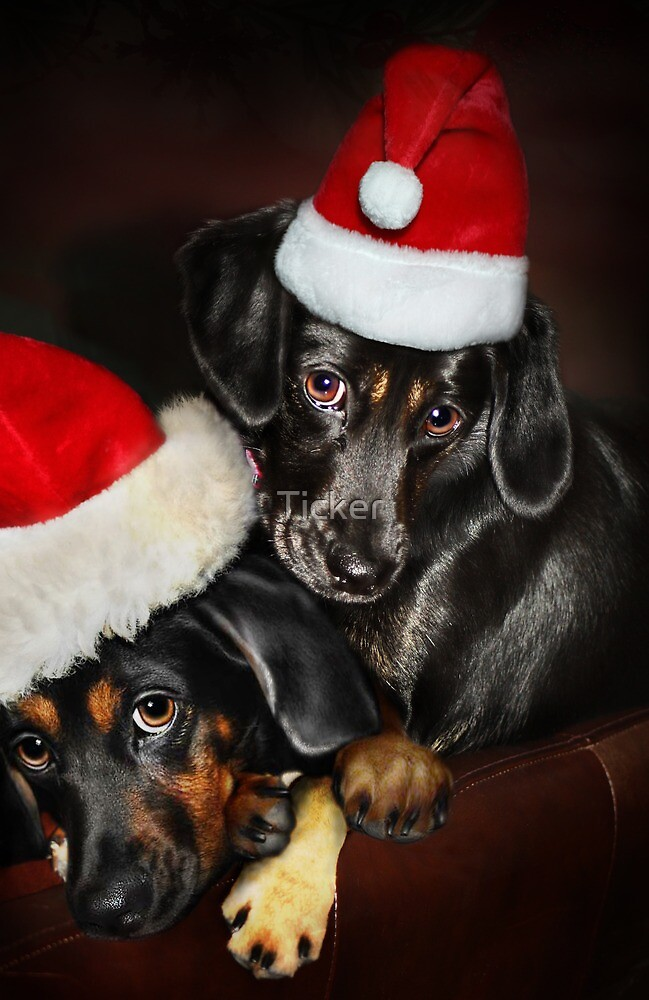 Together for the Holidays by Ticker