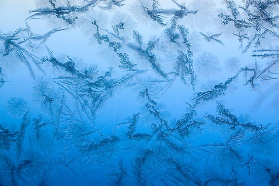 Blue Frost by Debbie Pinard