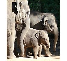 Baby Asian Elephant Socialising Photographic Print
