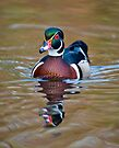 Male Wood Duck by Michael Cummings