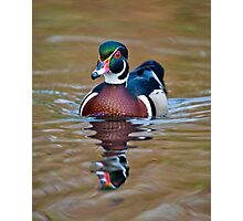 Male Wood Duck Photographic Print