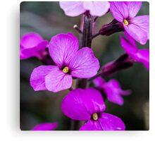 Macro Pink Flowers Canvas Print