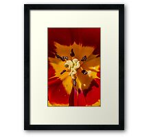 Macro Red and Yellow Tulip Flower Framed Print