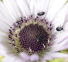 Bugging Blossom by Michelle Lee Blatt
