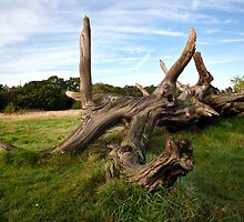 Breeched Oak by Gary Rayner
