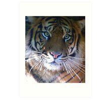Sumatran Tiger Whiskers Art Print