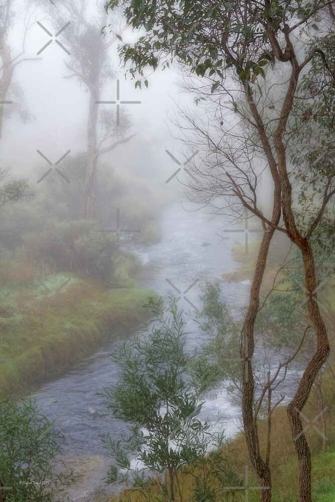A Misty Morning in Bridgetown, Western Australia by Elaine Teague