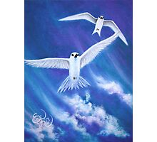 Flying High Fairy Terns Photographic Print