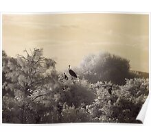 Wetlands in infrared Poster