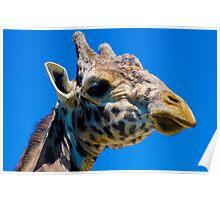 Giraffe Wednesday 3pm Poster