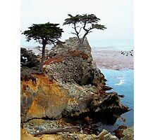 The Lone Cypress At Pebble Beach Photographic Print