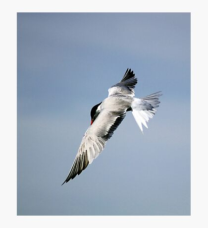U Tern Photographic Print