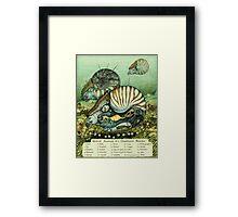 Nautilus Anatomy Framed Print