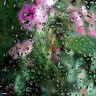 Rose Garden by Kitsmumma