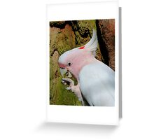 Pink Cockatoo Snack Time Greeting Card