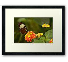 Wings Of Wonder Framed Print