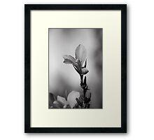 Elegantly Framed Print