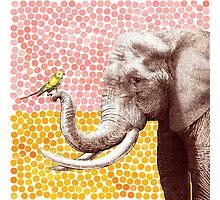 New Friends - Elephant & Bird Photographic Print
