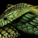 Green Mamba by Nature's realm