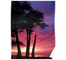Cypress Sunset Poster