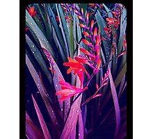 Gorgeous Flowers Photographic Print