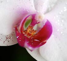 Heart of an Orchid by Renee Hubbard Fine Art Photography