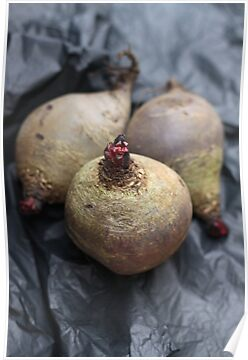 Beetroot by Jeanne Horak-Druiff
