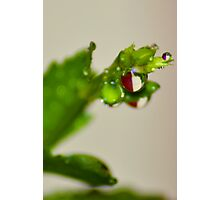 In the Spirit of Christmas Drops Photographic Print