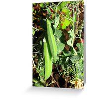 Sugar peas in its glory Greeting Card