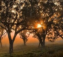 Sunrise through the trees by Julia Ott