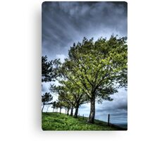 Surreal Trees Canvas Print