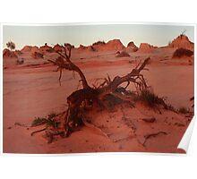Sunset - Lake Mungo - NSW Poster