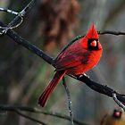 """Simply Red"" by Melinda Stewart Page"