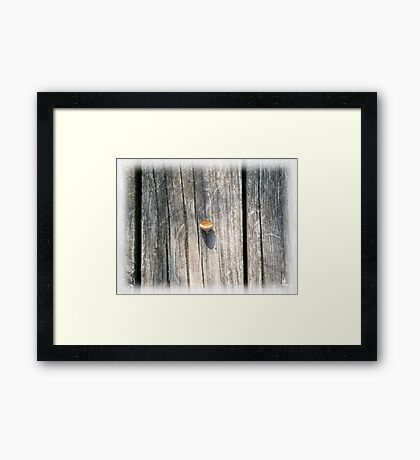 empty acorn Framed Print