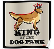 Golden Retriever  King of the Dog Park Poster